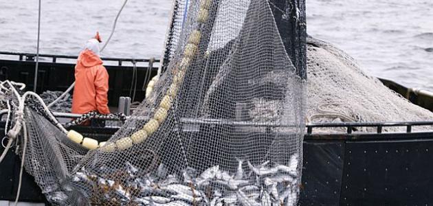 كيف تصطاد السمك