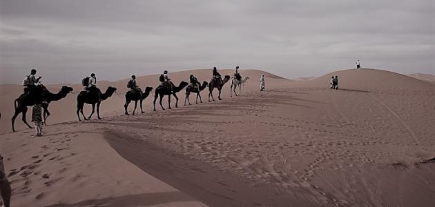 ابو عبد شمس