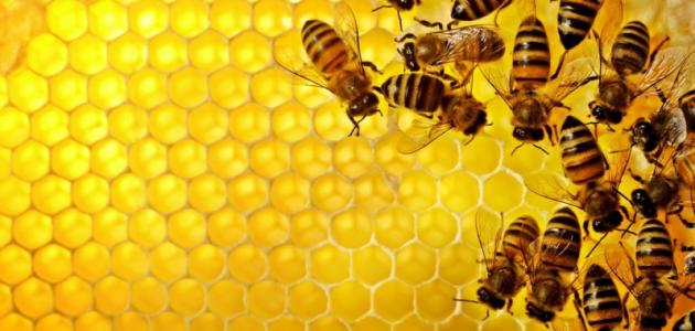 ما فوائد النحل