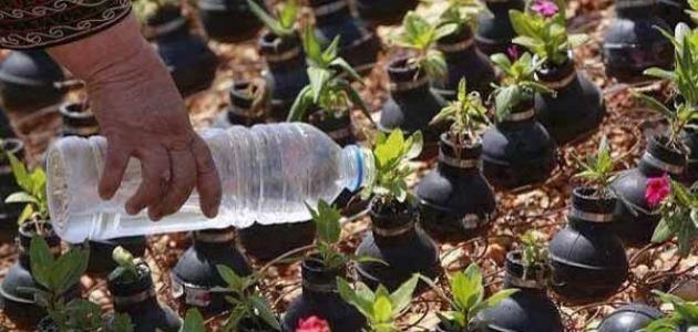 كيف تزرع الورد