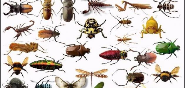 بحث عن الحشرات النافعة