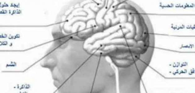 ضمور المخ وأسبابه