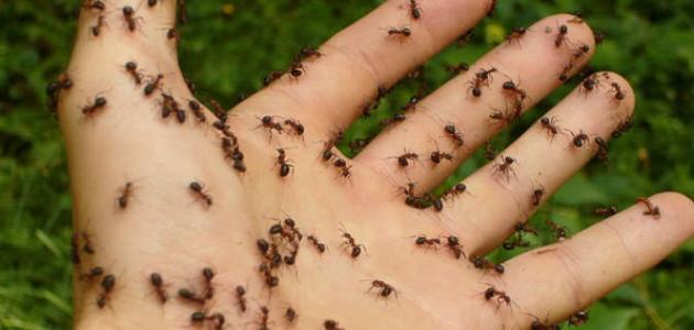 كيف نقضي على النمل
