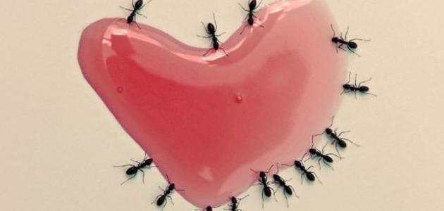 كيف أتخلص من النمل