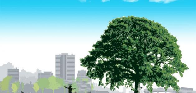 فوائد الشجر وكيفية المحافظة عليه