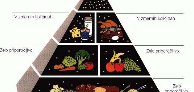 على ماذا يدل وجود الدهون والسكريات في قمة الهرم الغذائي