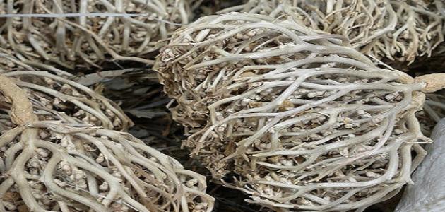 طريقة استخدام عشبة الإسبغول