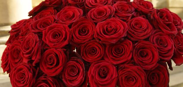 كلام عن الورد موضوع