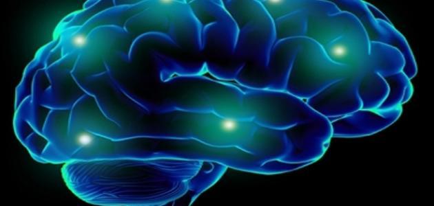 كيف يعمل الدماغ
