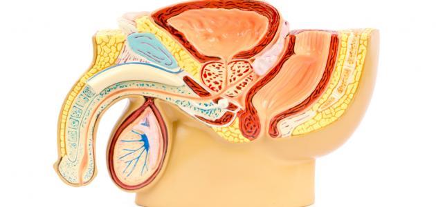تضخم البروستاتا أسبابها وعلاجها