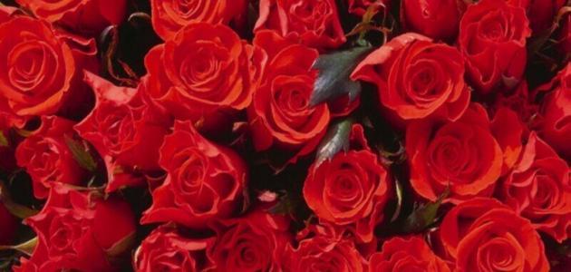 كيف نحافظ على الورد مدة أطول