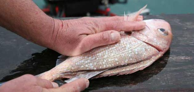 كيف أنظف السمك
