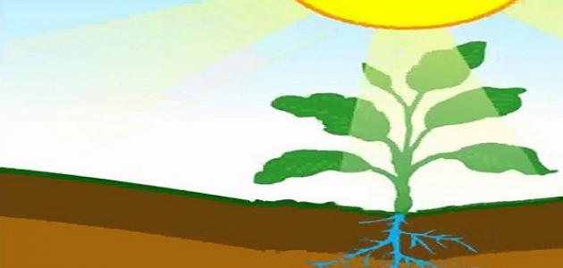 كيف تستخدم النباتات والحيوانات الطاقة الشمسية