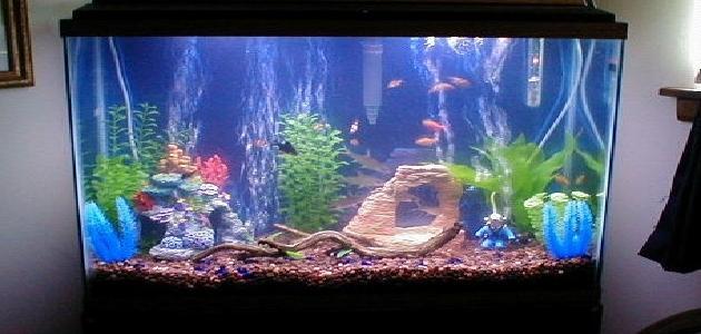 كيف تصنع حوض سمك