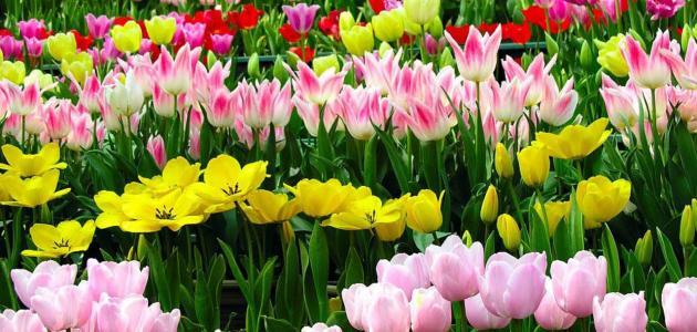 عبارات عن الزهور