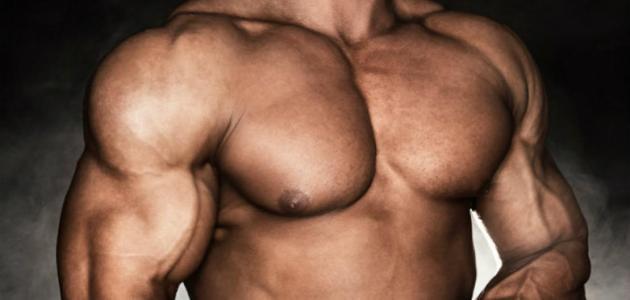 كيف تحصل العضلات على الطاقة اللازمة لانقباضها وانبساطها