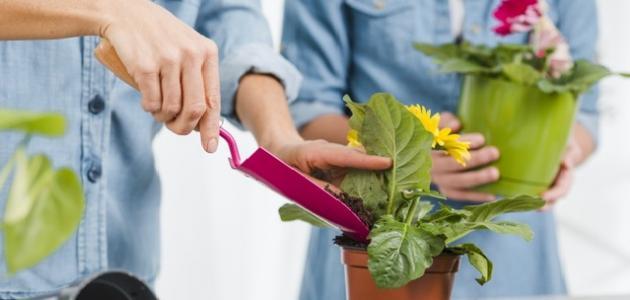 كيف أزرع في البيت