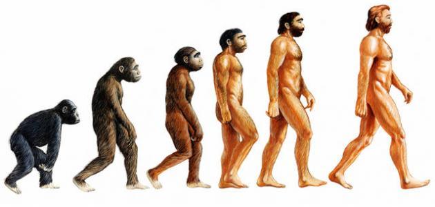 بحث عن نظرية دارون