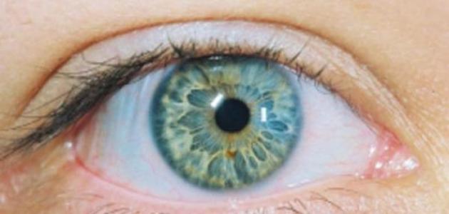 كيف أتعلم لغة العيون