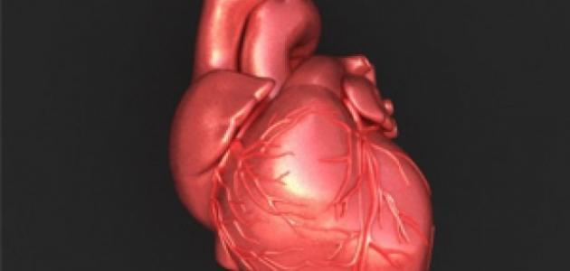 كيف يعمل قلب الإنسان