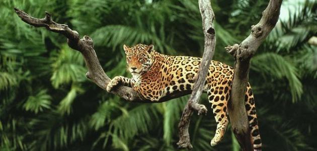 أين توجد غابات الأمازون