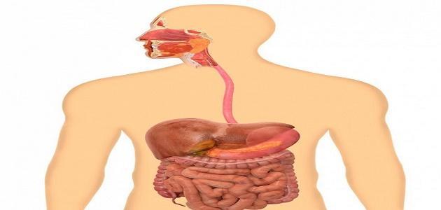 كيف تتم عملية الهضم في جسم الإنسان