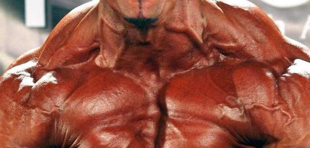 كيف تكبر عضلاتك بسرعة
