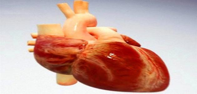 كيف ينتقل الدم خلال القلب