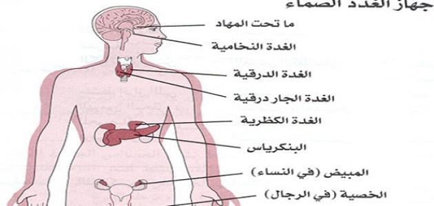أين توجد الغدد في جسم الإنسان