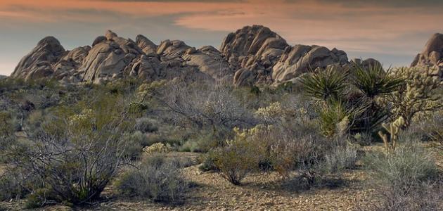 أين تقع صحراء موهافي