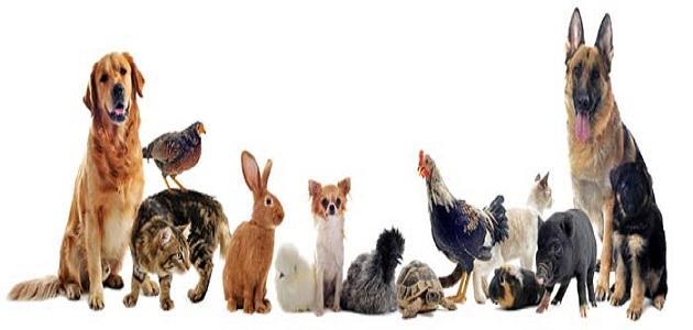 تربية الحيوانات الأليفة