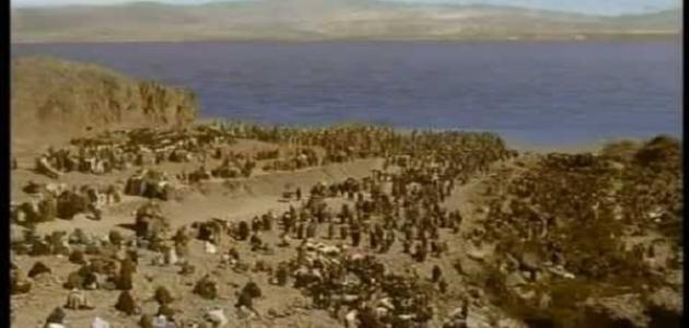 أين غرق فرعون وجنوده
