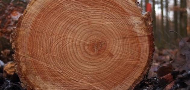 كيف تعرف عمر الشجرة