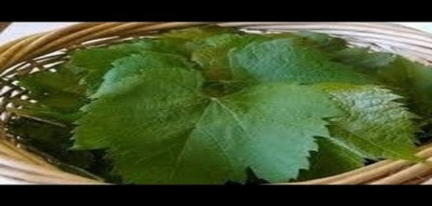 طريقة حفظ ورق العنب المحشي