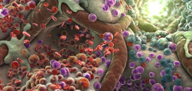 كيف تحصل الخلية على الطاقة اللازمة للقيام بأنشطتها
