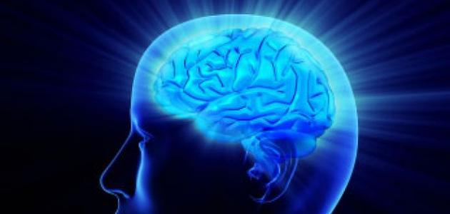 أين يقع عقل الإنسان