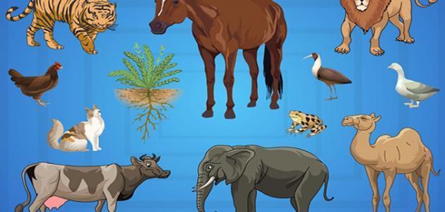 كيف تؤثر الكائنات الحية على حياتنا