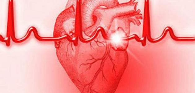 أين توجد عضلة القلب