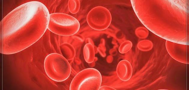 بكتيريا الدم عند الكبار