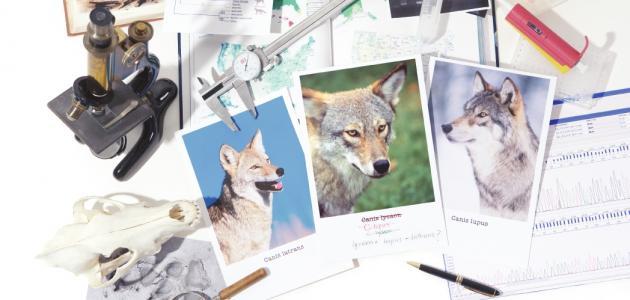 بحث عن جهود العلماء في تصنيف الحيوانات
