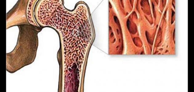 أين يوجد نخاع العظم