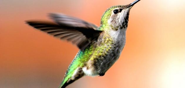 بحث عن بديع خلق الله في الطيور