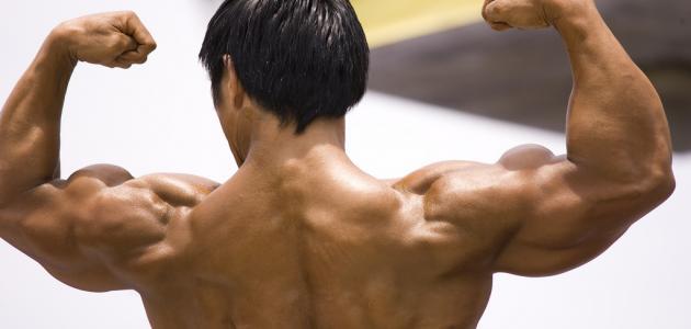 كيفية تقوية العضلات
