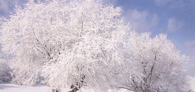 كم شهر فصل الشتاء