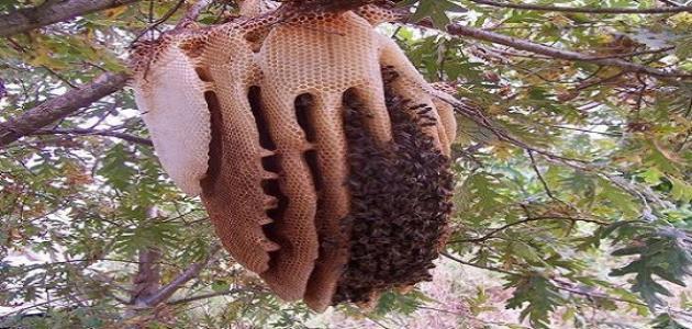 كيف أتخلص من خلية النحل
