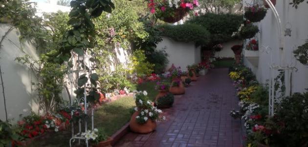 كيف أزرع حديقة بيتي