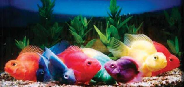 من أسباب موت سمك الزينة فرط التغذية