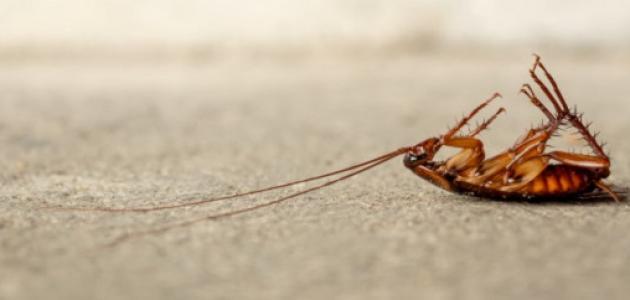 كيفية القضاء على الصراصير الصغيرة