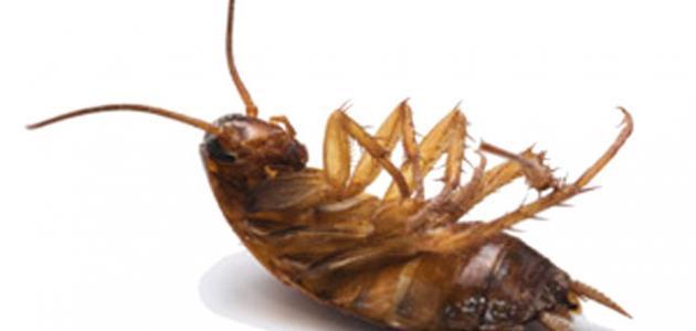 كيفية القضاء على الصراصير في المنزل