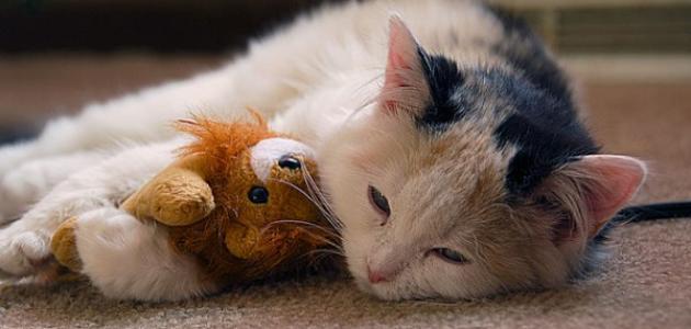 أمراض القطط وكيفية علاجها